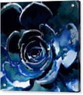 Succulent In Blue Acrylic Print