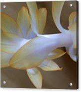 Succulent Season Acrylic Print