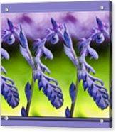 Succulent Swirl Acrylic Print