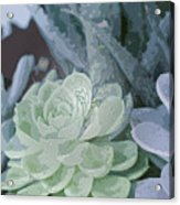 Succulents 2 Acrylic Print