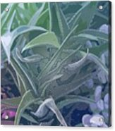 Succulents I Acrylic Print