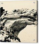 Suddenly A Lone Beach Camel Appeared Acrylic Print