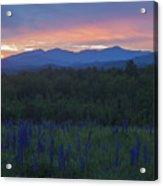 Sugar Hill Lupines And Presidential Range At Dawn Acrylic Print