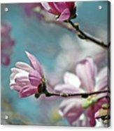 Sugar Magnolia Acrylic Print