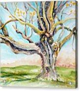 Sugar Maple On Mutton Lane Acrylic Print
