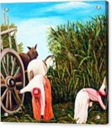 Sugarcane Worker 1 Acrylic Print