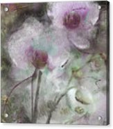 Suggestion Of An Orchid Acrylic Print