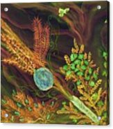 Sukkot-the Lulav Acrylic Print
