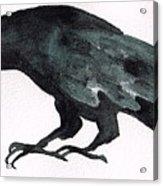 Sulky Bird Acrylic Print