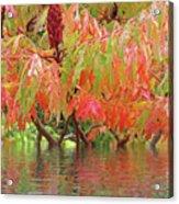 Sumac Tree Autumn Reflections Acrylic Print