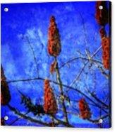 Sumac Tree Acrylic Print
