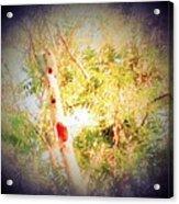 Sumac Tree In The Sunlight Acrylic Print