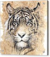Sumatra Acrylic Print by Debra Jones