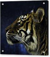 Sumatran Tiger Profile Acrylic Print