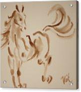 Sumi Horse Acrylic Print by Lyn Vic