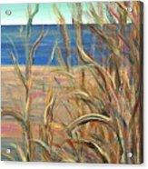 Summer Beach Grasses Acrylic Print