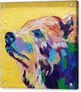 Summer Bear Acrylic Print