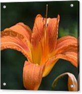 Summer Bloom-3 Acrylic Print