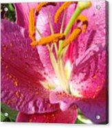 Summer Botanical Garden Art Pink Calla Lily Flower Baslee Troutman Acrylic Print