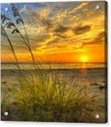 Summer Breezes Acrylic Print