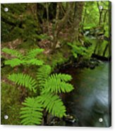 Summer Brook Acrylic Print