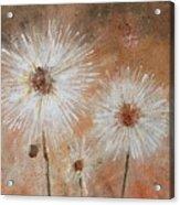 Summer Dandelions Acrylic Print