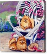 Summer Day - Pomeranian Acrylic Print by Lyn Cook