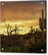 Summer Desert Skies  Acrylic Print