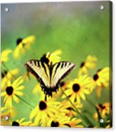 Summer Dream Acrylic Print