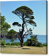 Summer Dunmore East Acrylic Print