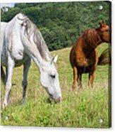 Summer Evening For Horses Acrylic Print