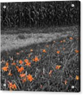 Summer Fields Acrylic Print
