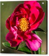 Summer Flower II Acrylic Print