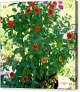 Summer Flowers 10 Acrylic Print