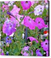 Summer Flowers 8 Acrylic Print