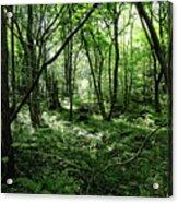 Summer Forest On A Sunny Day Acrylic Print