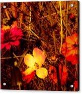 Summer Glow On Flowers Acrylic Print