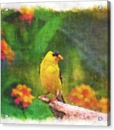 Summer Goldfinch - Digital Paint 4 Acrylic Print