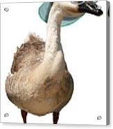 Summer Goose Acrylic Print