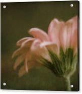 Summer Impressions Acrylic Print