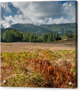 Summer In The Bald Hills 1 Acrylic Print