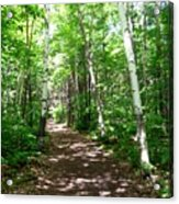 Summer In The Birch Grove Acrylic Print