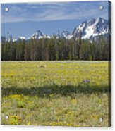 Summer In The Sawtooths Acrylic Print