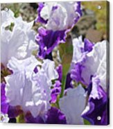 Summer Iris Garden Art Print White Purple Irises Flowers Baslee Troutman Acrylic Print