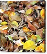 Summer Leaves For Fall Acrylic Print
