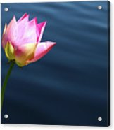 Summer Lily Acrylic Print