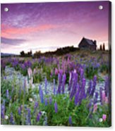 Summer Lupins At Sunrise At Lake Tekapo, Nz Acrylic Print by Atan Chua