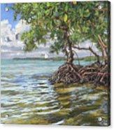 Summer Mangrove Melody Acrylic Print
