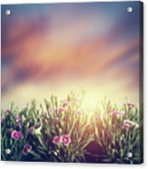Summer Meadow Flowers In Grass At Sunset. Vintage Acrylic Print