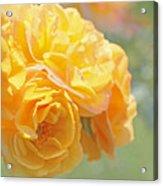 Golden Yellow Roses In The Garden Acrylic Print